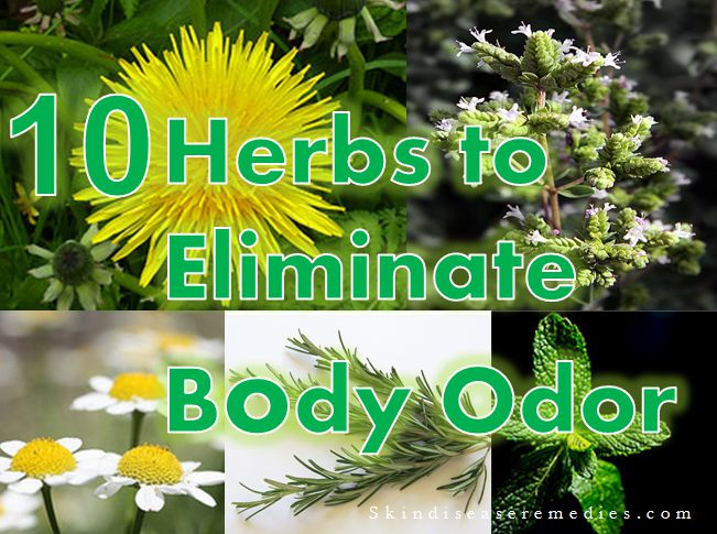 Natural Herbs For Body Odor