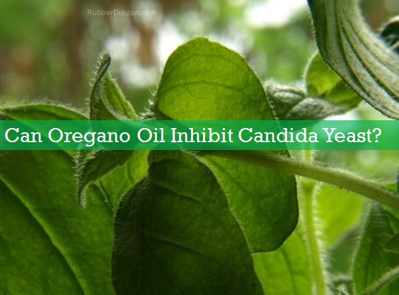 oil of oregano for yeast infection
